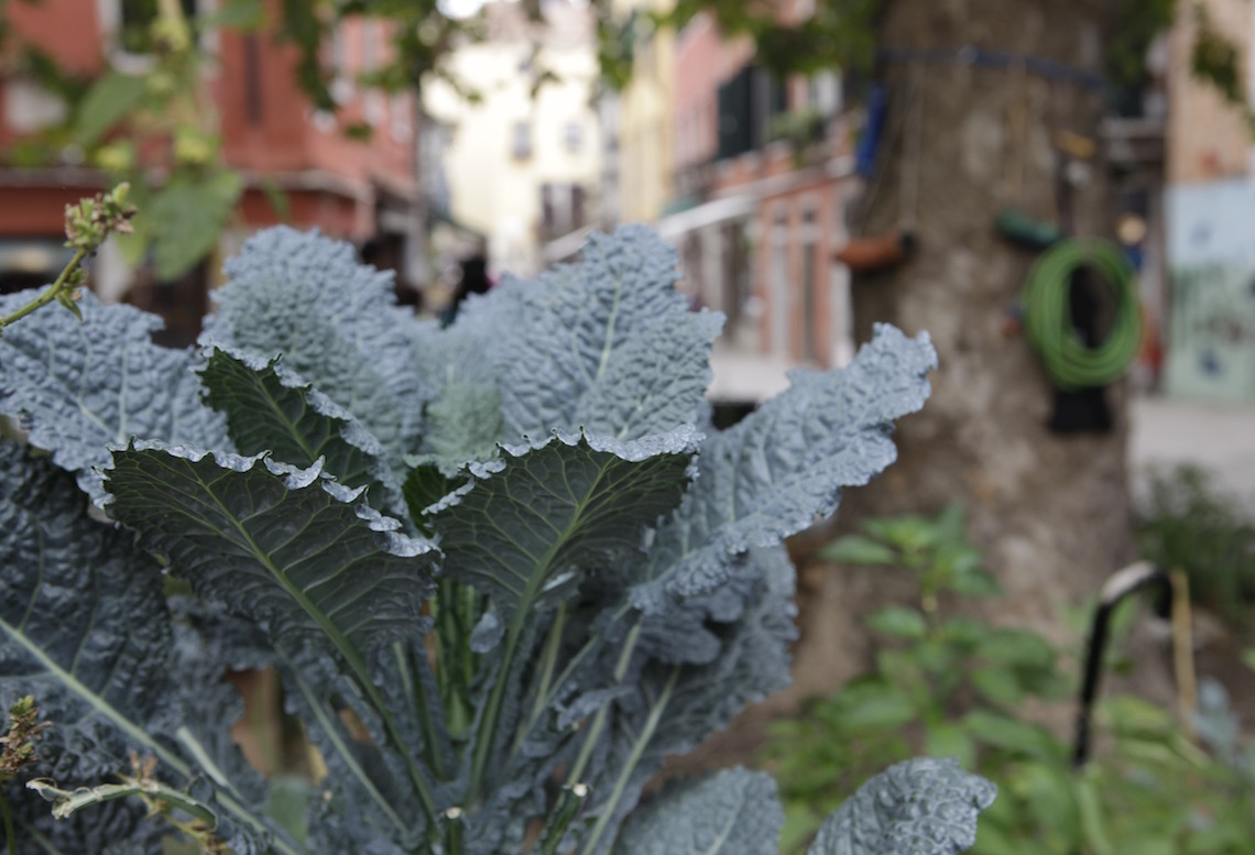 25 Pick Up Lines for Kale Lovers