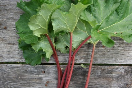 Marinated Rhubarb with Lemon Verbena on Foodie Underground