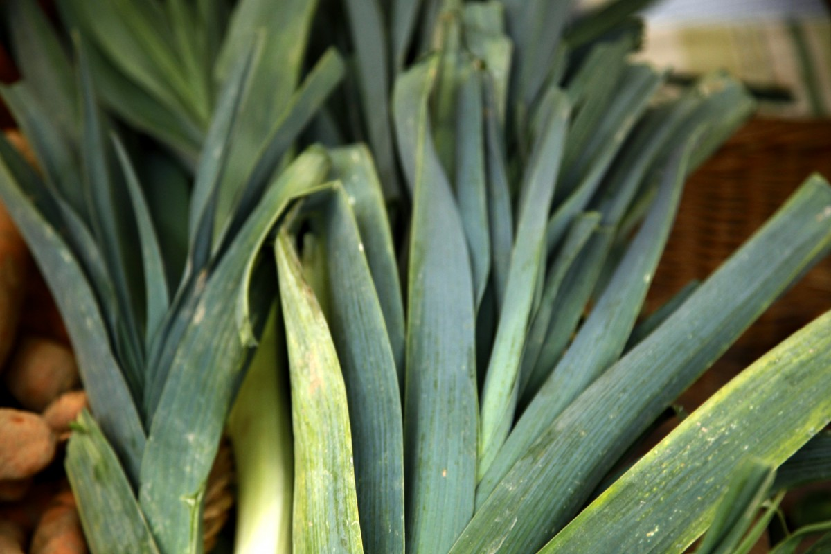 Leek Stalks on Foodie Underground
