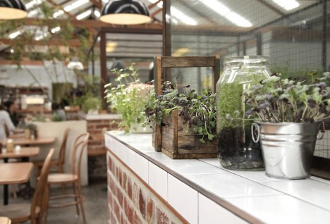 East Elevation: The Melbourne Cafe That is All About Microgreens and Composting Coffee Grounds