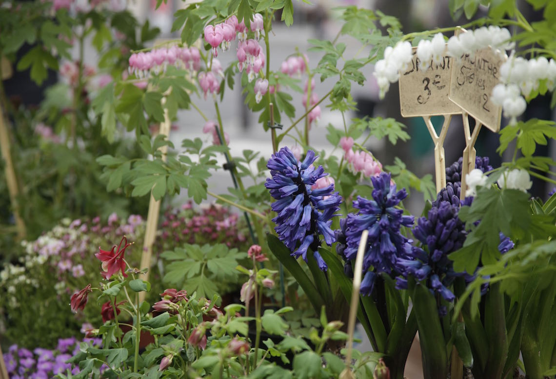 A Love Letter to Spring on Foodie Underground