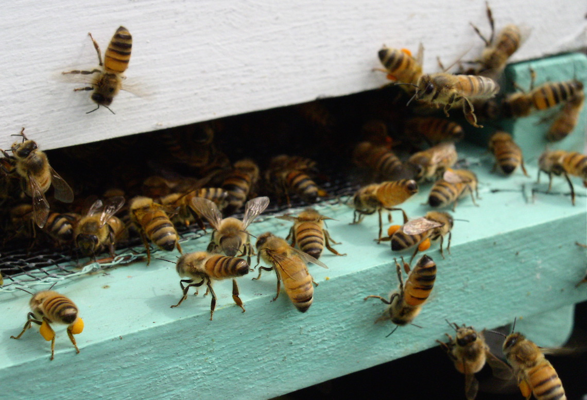 Can Urban Beekeeping Projects Save the Bees and Our Food System?