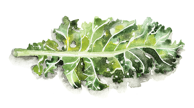 How to Draw Food Instead of Photographing It: 6 Helpful Food Illustrator Tips - illustration by Jessie Kanelos Weiner