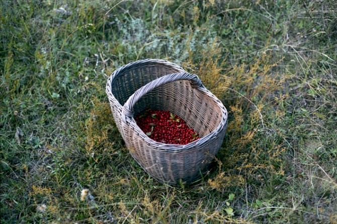 Berry Basket by Collective Plant