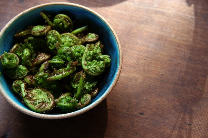 Fiddleheads for Fiddlehead Pesto