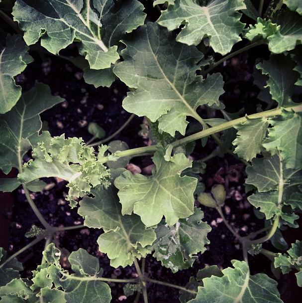 25 Uses for Kale That Never Crossed Your Mind