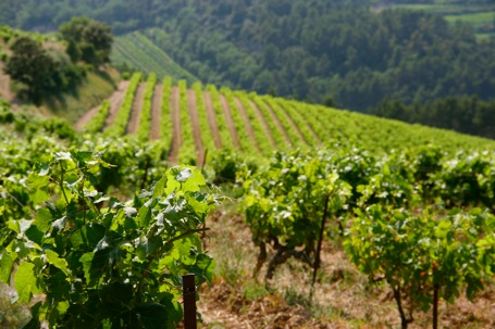 On the Search for Natural Wine in the South of France